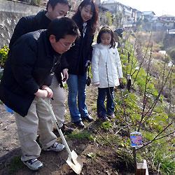 私の梅の記念植樹祭