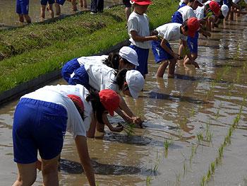 子どもたちも田植え体験