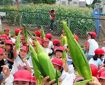 トウモロコシ畑はジャングルみたい!(小学生の収穫体験)