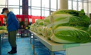 ええっ!人間より大きな白菜・・・!?(第34回箕面市農業祭)