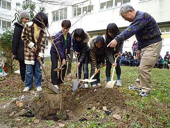 萱野北小6年生が卒業記念で桜を植樹