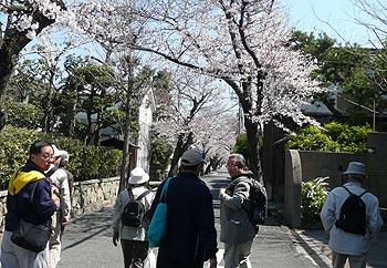桜ヶ丘カフェ健康教室〜桜めぐり