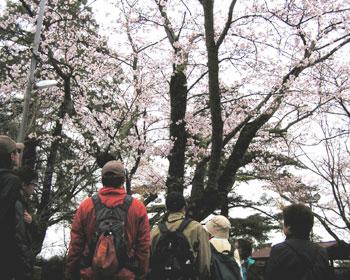 桜を愛でる国際交流クリーンハイキング