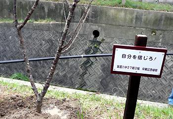 六中卒業記念植樹と並木道命名式