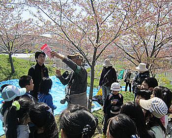 桜植樹10周年記念「めんぎょ」の花見