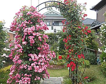 粟生外院でバラの饗宴