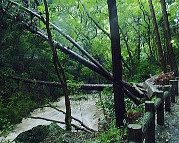 台風第18号の箕面公園内の爪痕