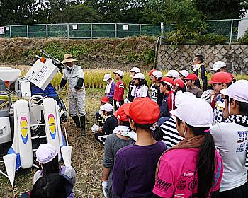 箕面小学校5年生稲刈り体験