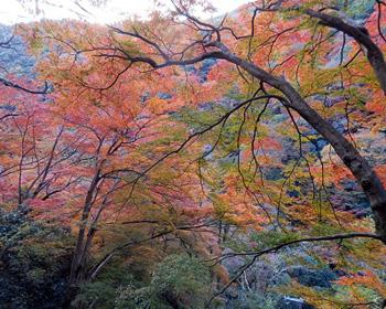 紅葉の箕面山