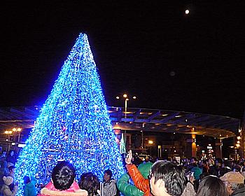 1日限定のクリスマスツリー
