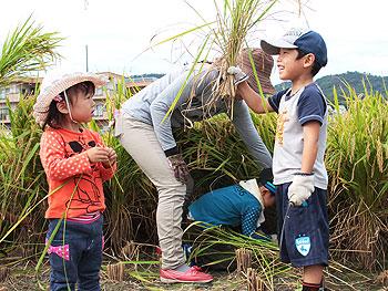 市民農業体験「稲刈り」