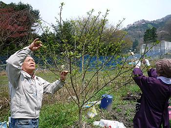 止々呂美の春の珍味・花サンショウ