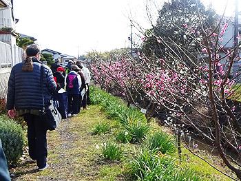 梅の箕川・見学会