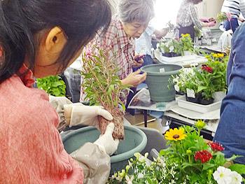 花とみどりの学校「春のお花の寄せ植え実習」