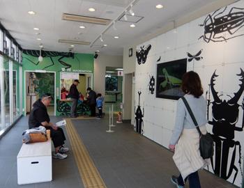 箕面公園昆虫館がリニューアルオープン!