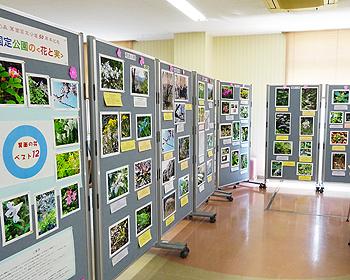 「箕面国定公園の花と実展」が開催中