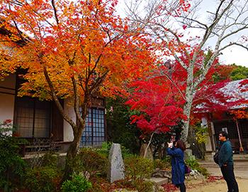 西江寺の境内の紅葉、今見頃です!