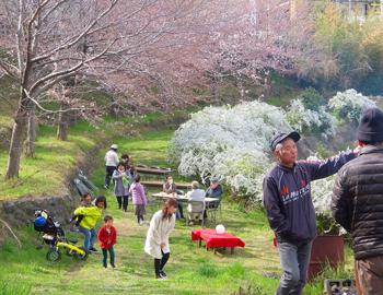 豊川北小地区福祉会で「お花見の会」