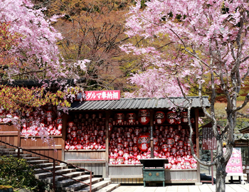 勝尾寺の春