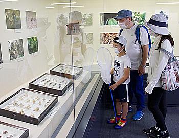 手塚治虫さんが採集した昆虫の標本、期間限定で公開