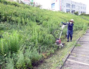木戸ケ池緑地の草刈り活動、前とあと