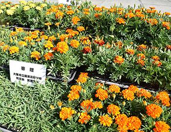 1500株の花苗が箕面市に寄贈されました